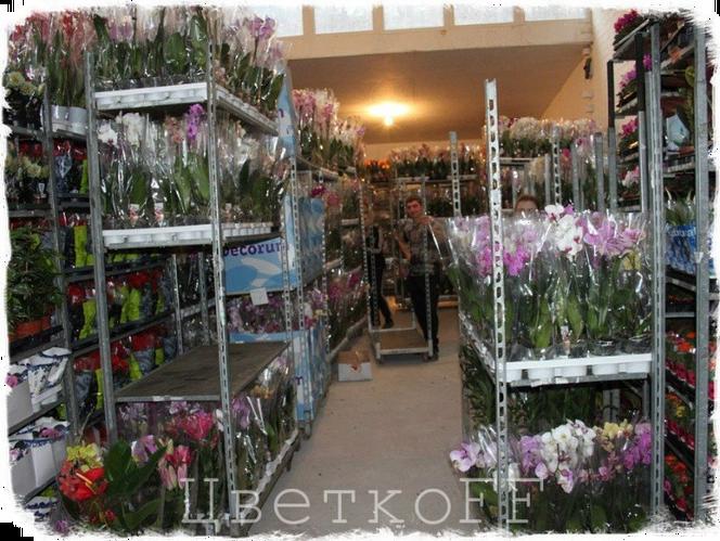 Оптом екатеринбурге, оптовая база продажи цветов чебоксары